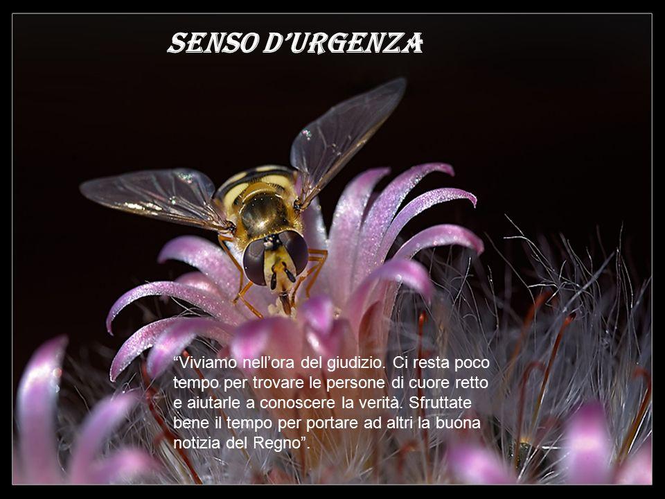 SENSO D'URGENZA