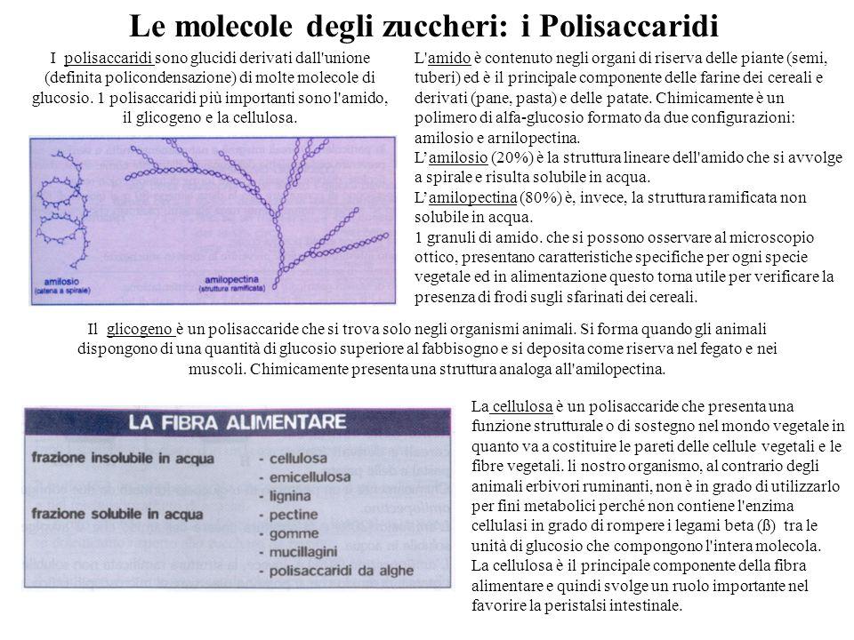Le molecole degli zuccheri: i Polisaccaridi