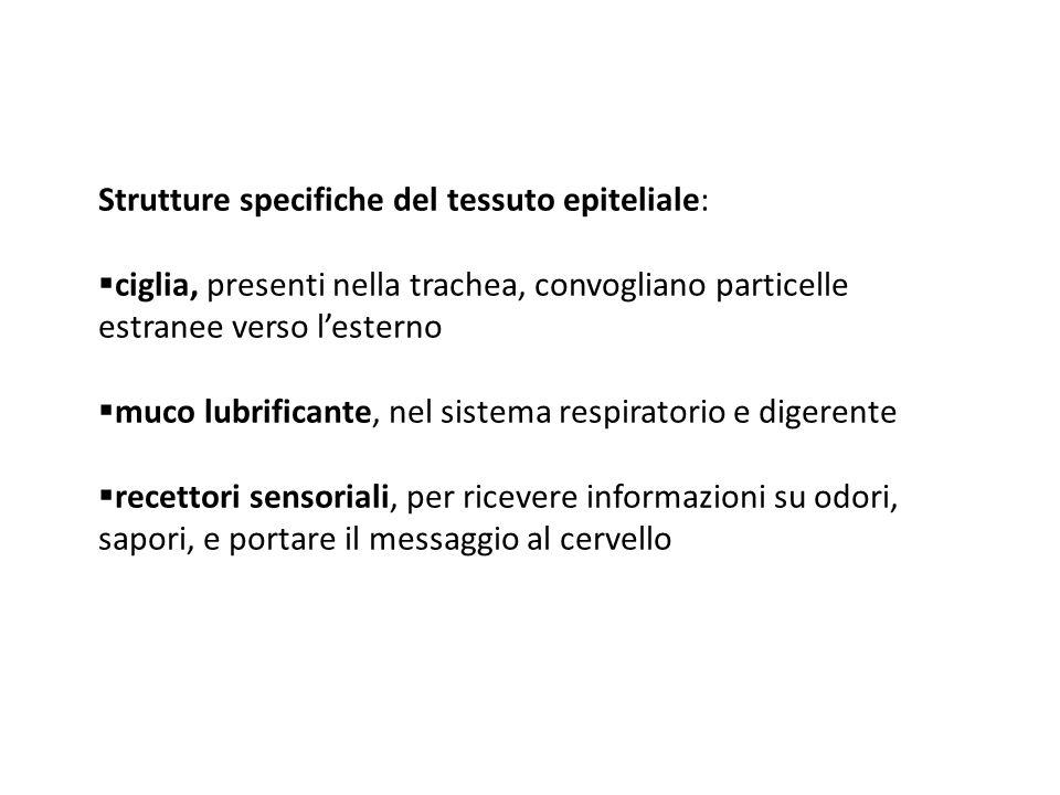 Strutture specifiche del tessuto epiteliale: