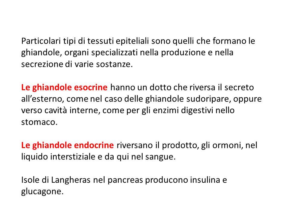 Isole di Langheras nel pancreas producono insulina e glucagone.
