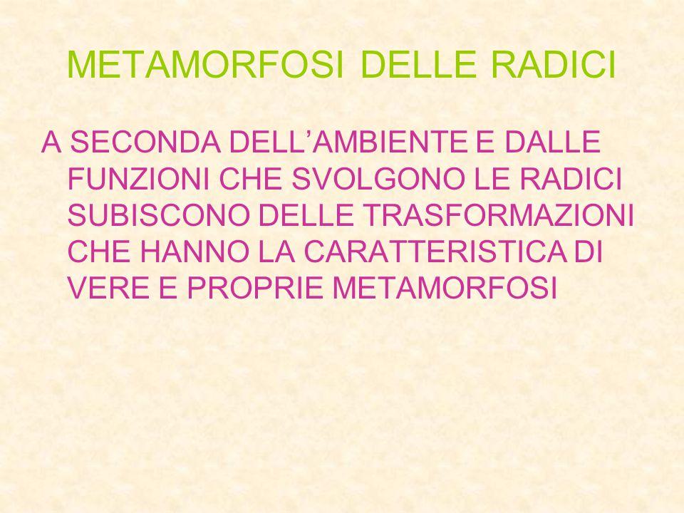 METAMORFOSI DELLE RADICI