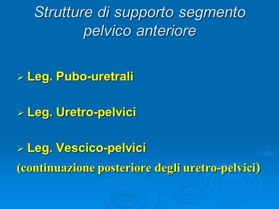 Strutture di supporto segmento pelvico anteriore