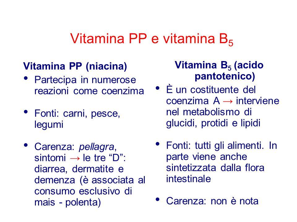Vitamina PP e vitamina B5