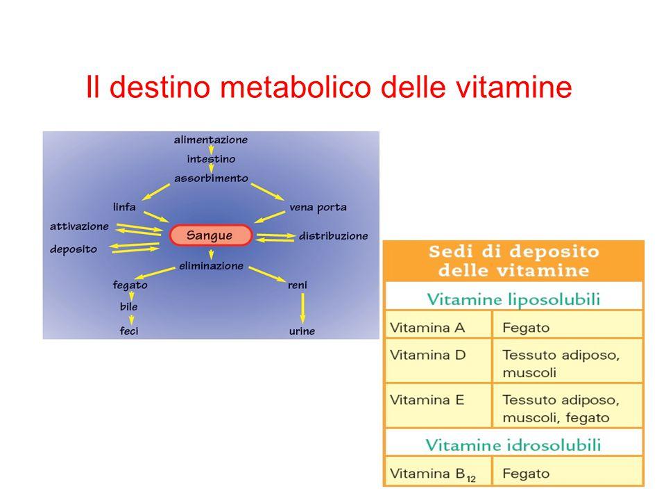 Il destino metabolico delle vitamine