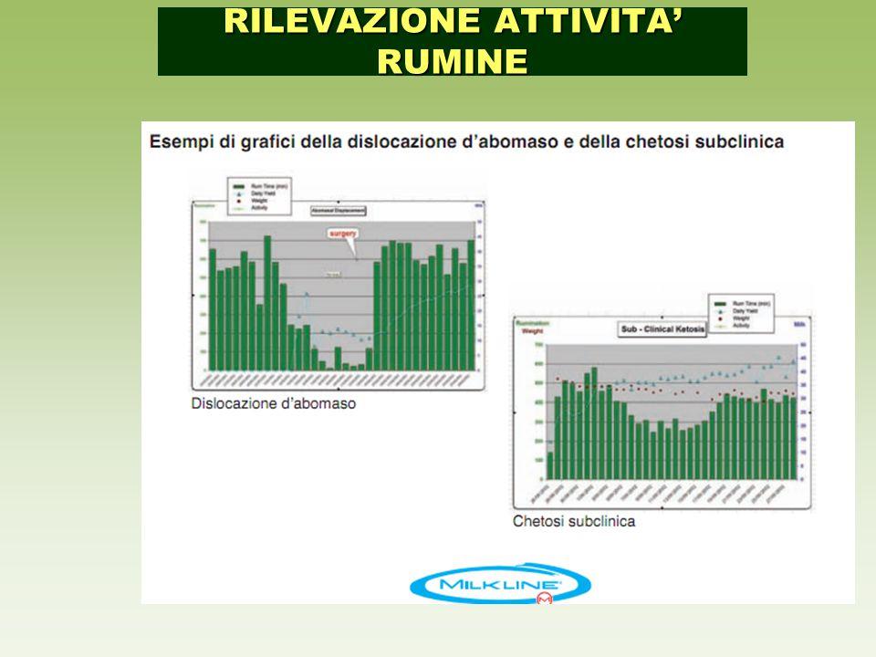 RILEVAZIONE ATTIVITA' RUMINE
