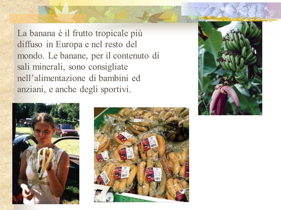 La banana è il frutto tropicale più diffuso in Europa e nel resto del mondo.