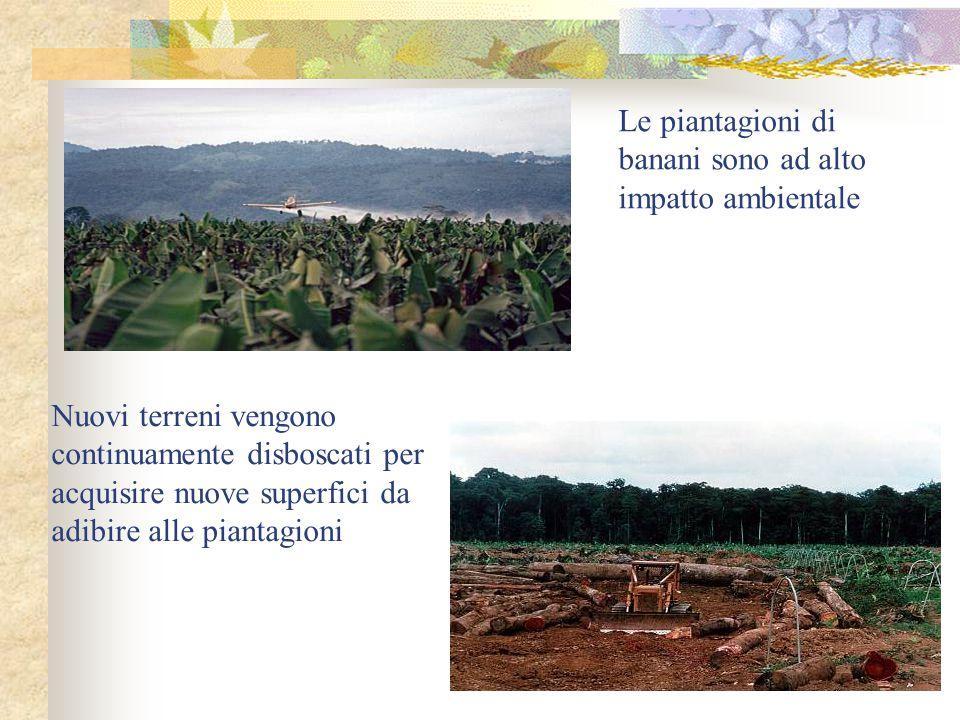 Le piantagioni di banani sono ad alto impatto ambientale