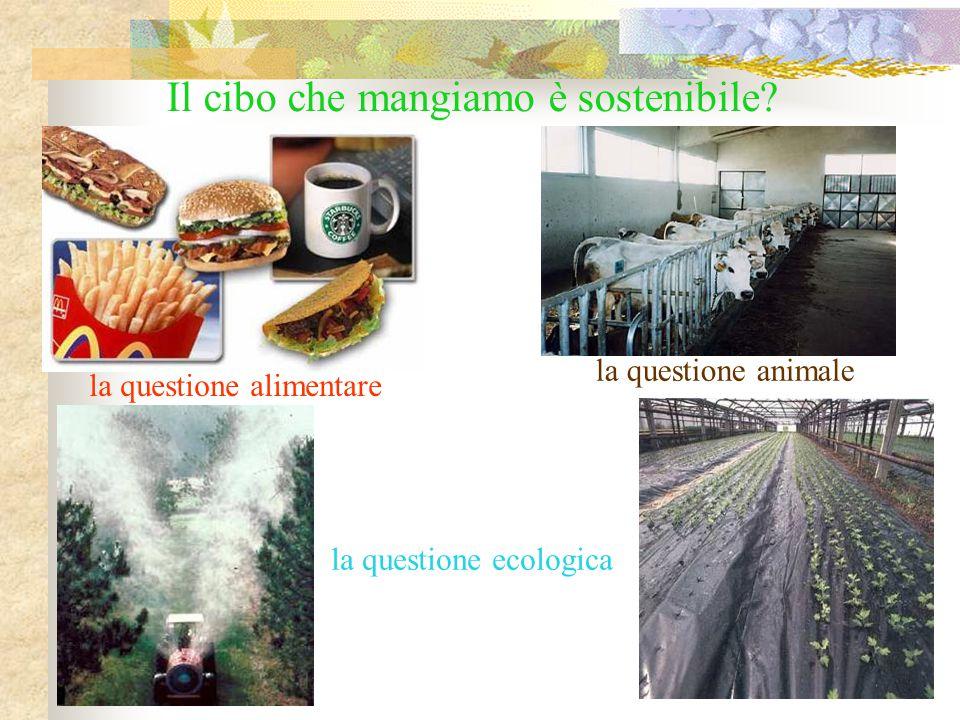Il cibo che mangiamo è sostenibile