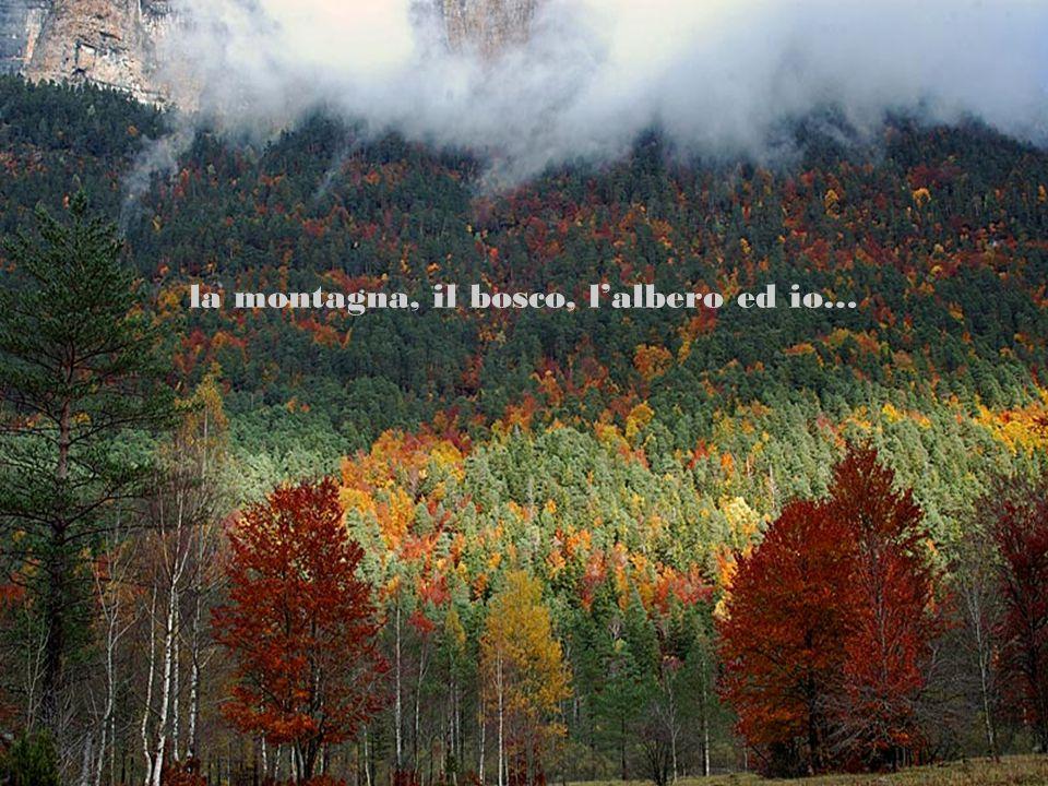 la montagna, il bosco, l'albero ed io…