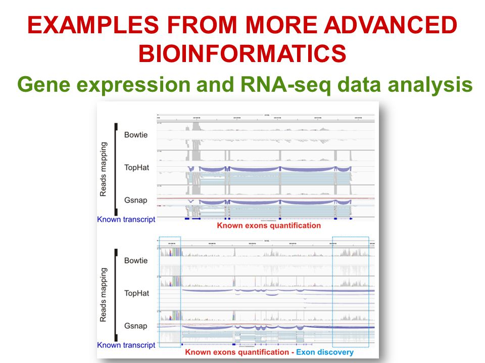 EXAMPLES FROM MORE ADVANCED BIOINFORMATICS