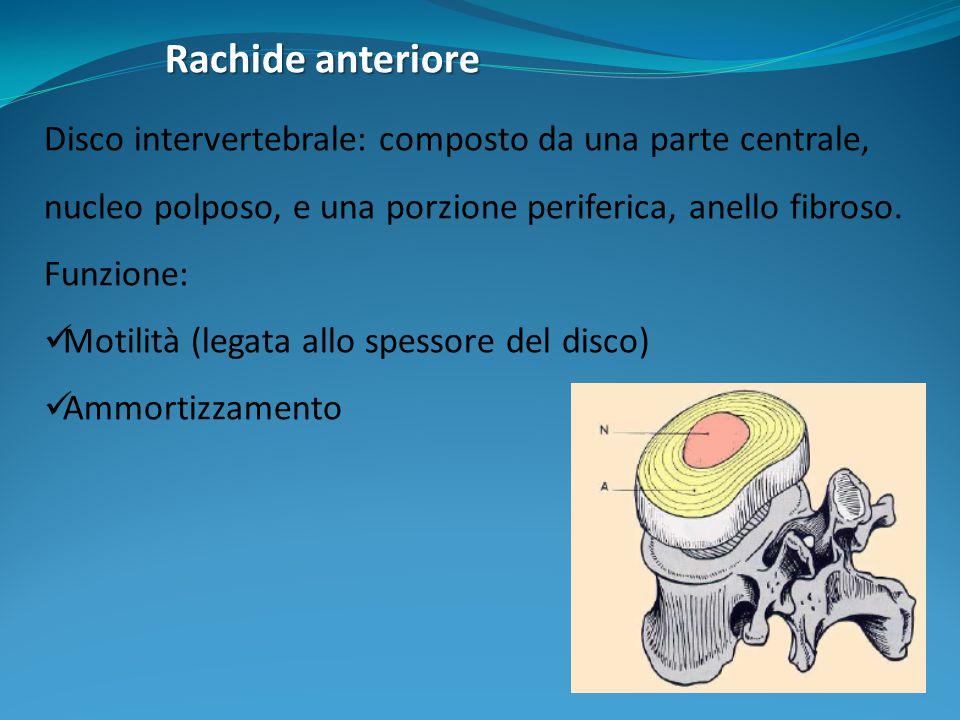 Rachide anteriore Disco intervertebrale: composto da una parte centrale, nucleo polposo, e una porzione periferica, anello fibroso.