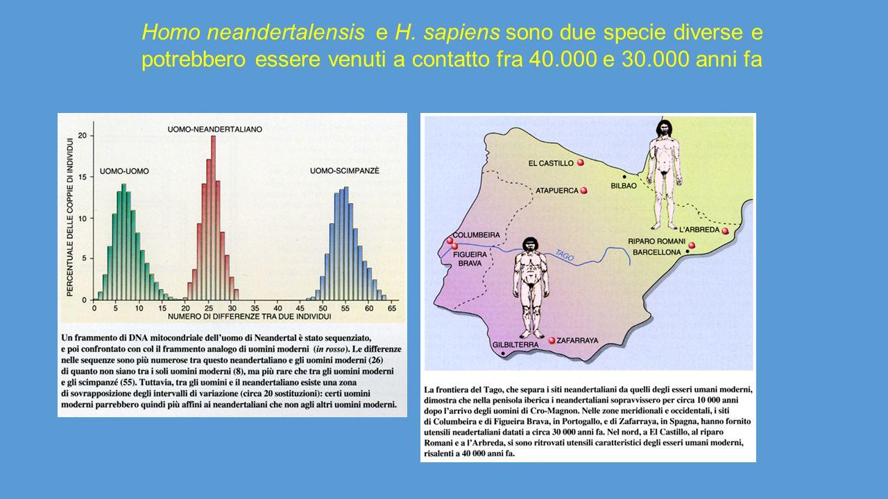 Homo neandertalensis e H
