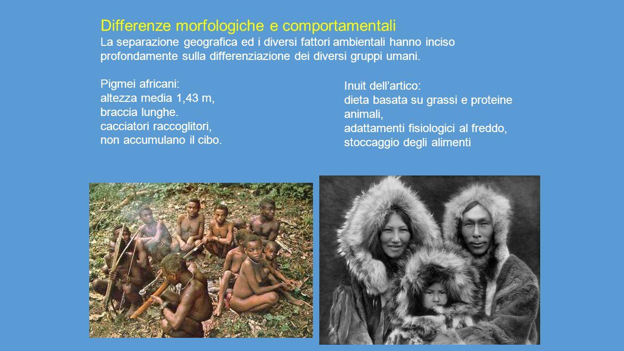 Differenze morfologiche e comportamentali