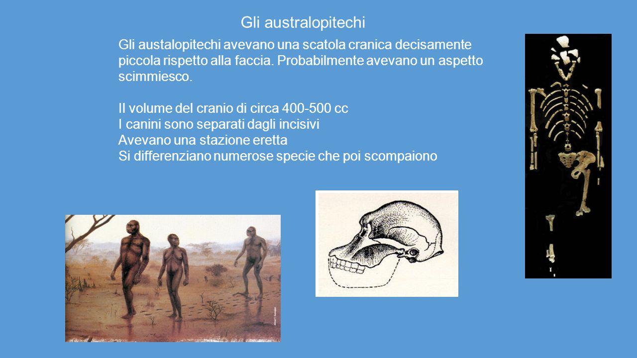 Gli australopitechi