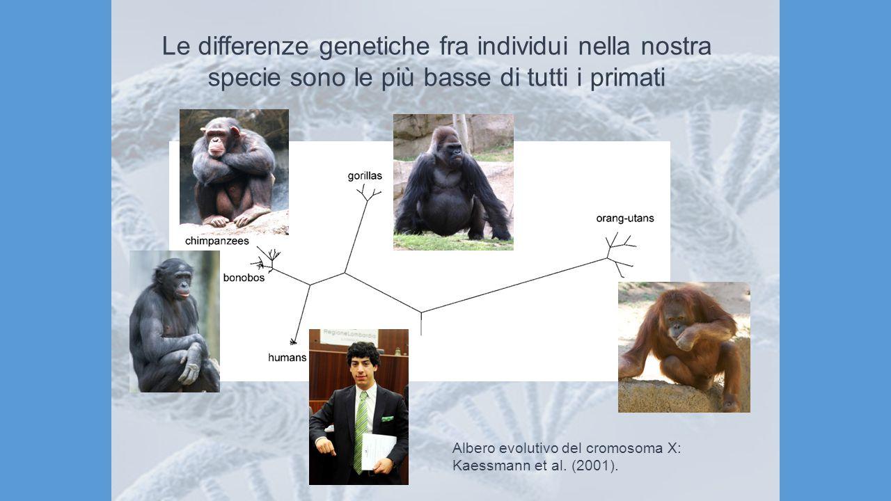 Le differenze genetiche fra individui nella nostra specie sono le più basse di tutti i primati
