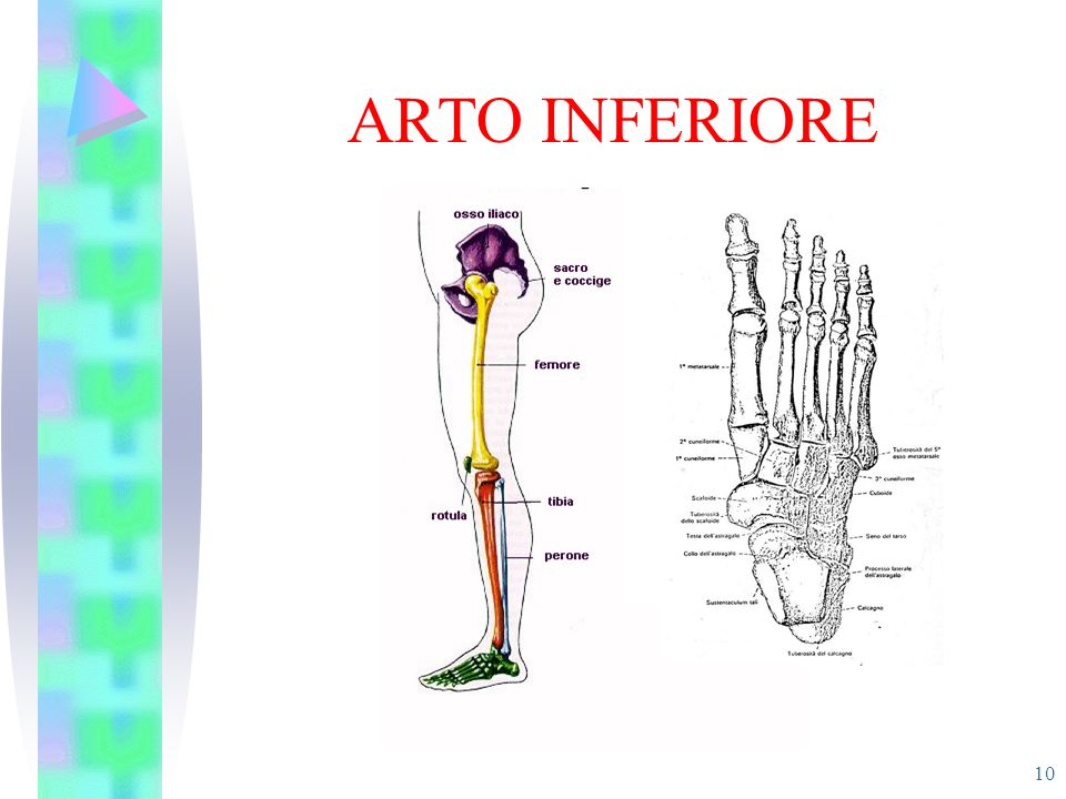 ARTO INFERIORE