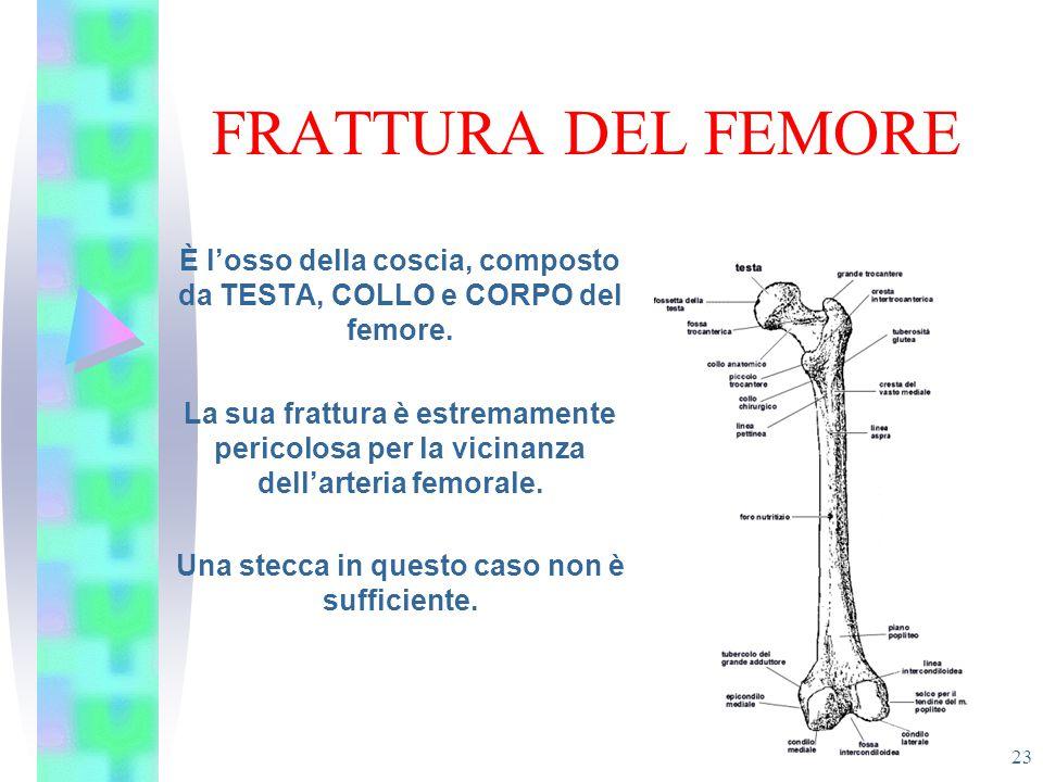 FRATTURA DEL FEMORE È l'osso della coscia, composto da TESTA, COLLO e CORPO del femore.