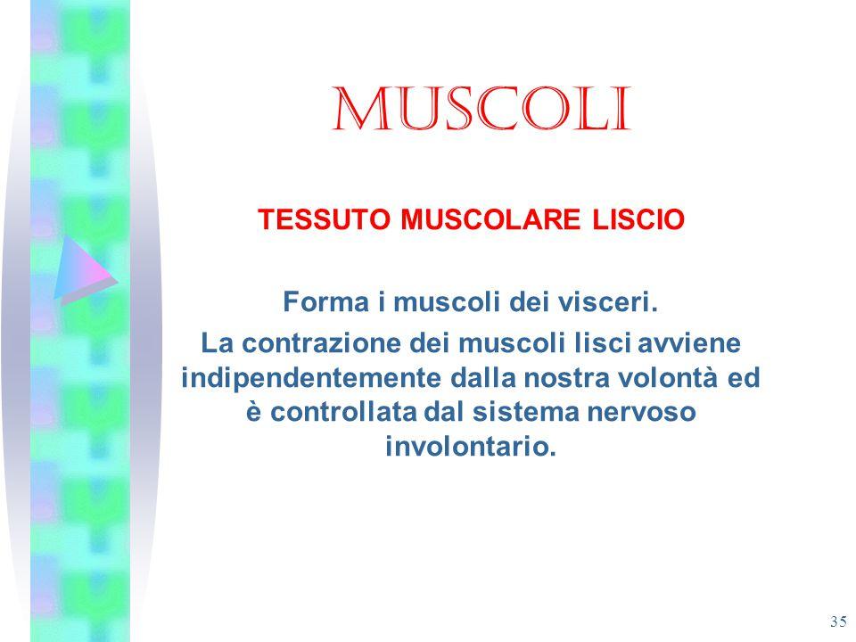 TESSUTO MUSCOLARE LISCIO Forma i muscoli dei visceri.