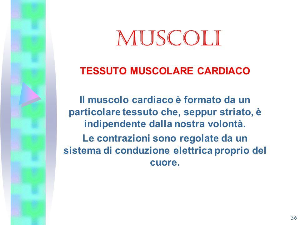 TESSUTO MUSCOLARE CARDIACO
