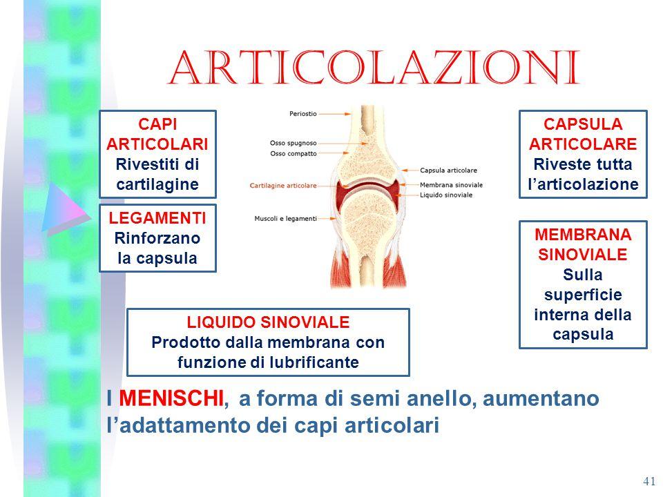 ARTICOLAZIONI CAPI ARTICOLARI. Rivestiti di cartilagine. CAPSULA ARTICOLARE. Riveste tutta l'articolazione.