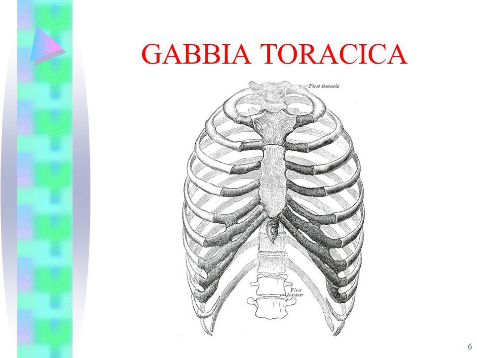 GABBIA TORACICA