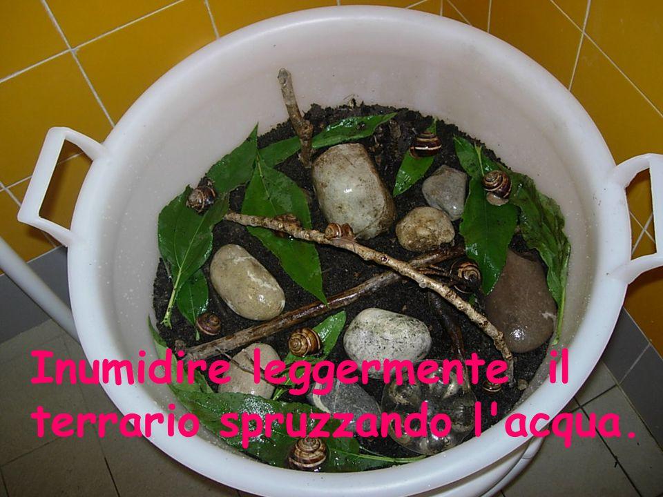 Inumidire leggermente il terrario spruzzando l acqua.