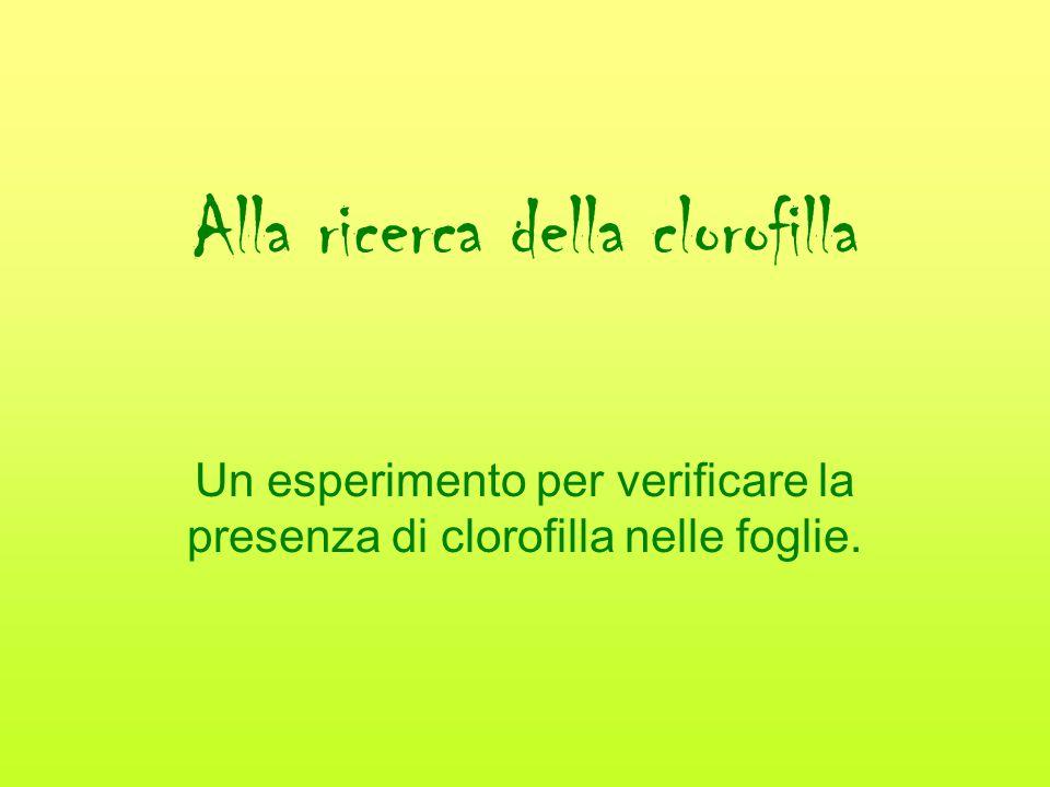 Alla ricerca della clorofilla