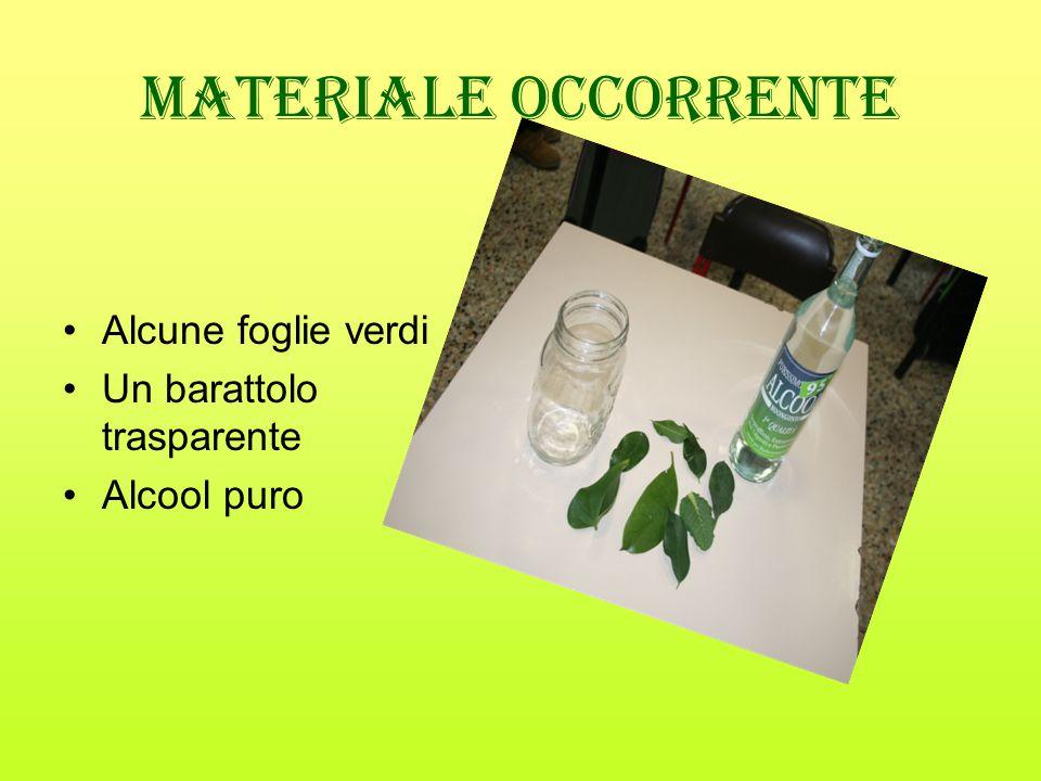 Materiale occorrente Alcune foglie verdi Un barattolo trasparente