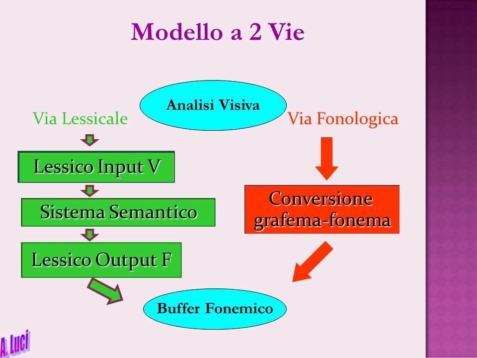 Modello a 2 Vie A. Luci Lessico Input V Conversione grafema-fonema