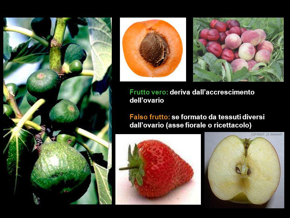Frutto vero: deriva dall'accrescimento dell'ovario