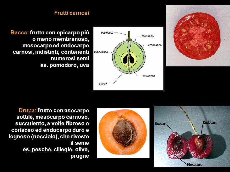 Frutti carnosi Bacca: frutto con epicarpo più o meno membranoso, mesocarpo ed endocarpo carnosi, indistinti, contenenti numerosi semi.