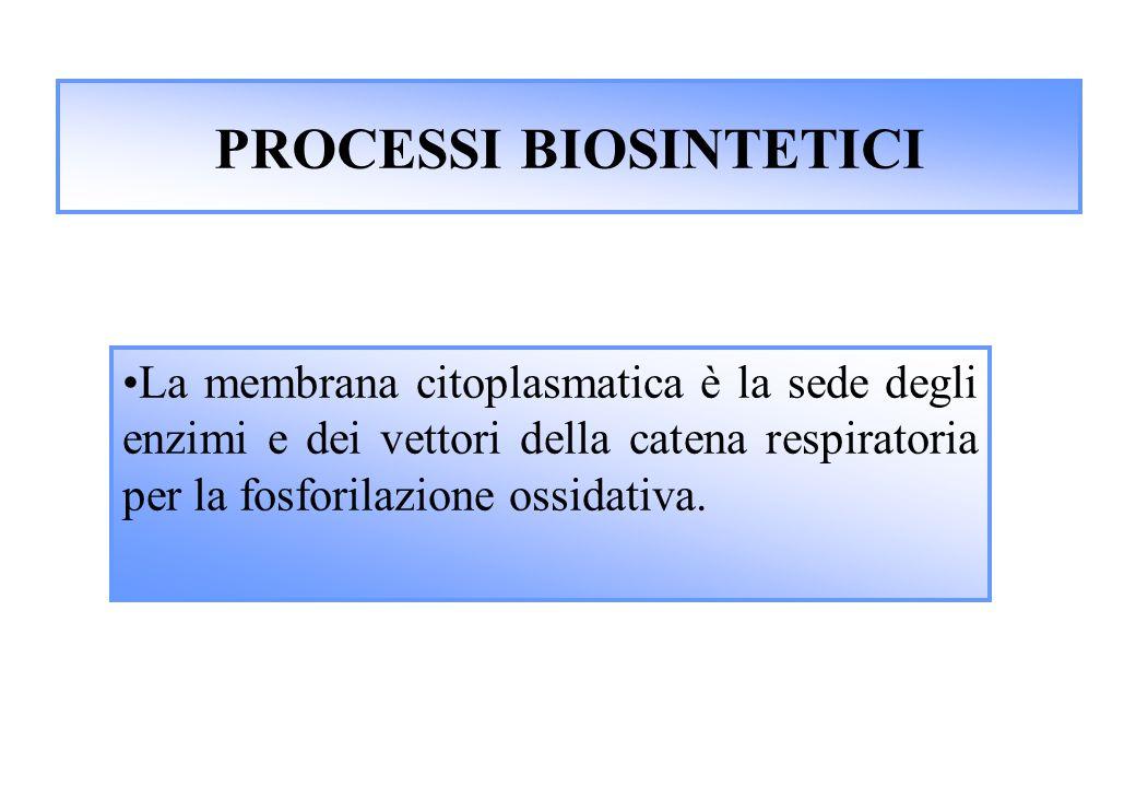 PROCESSI BIOSINTETICI