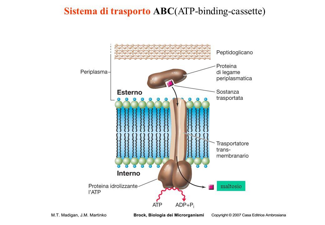 Sistema di trasporto ABC(ATP-binding-cassette)