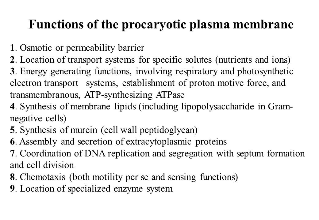 Functions of the procaryotic plasma membrane