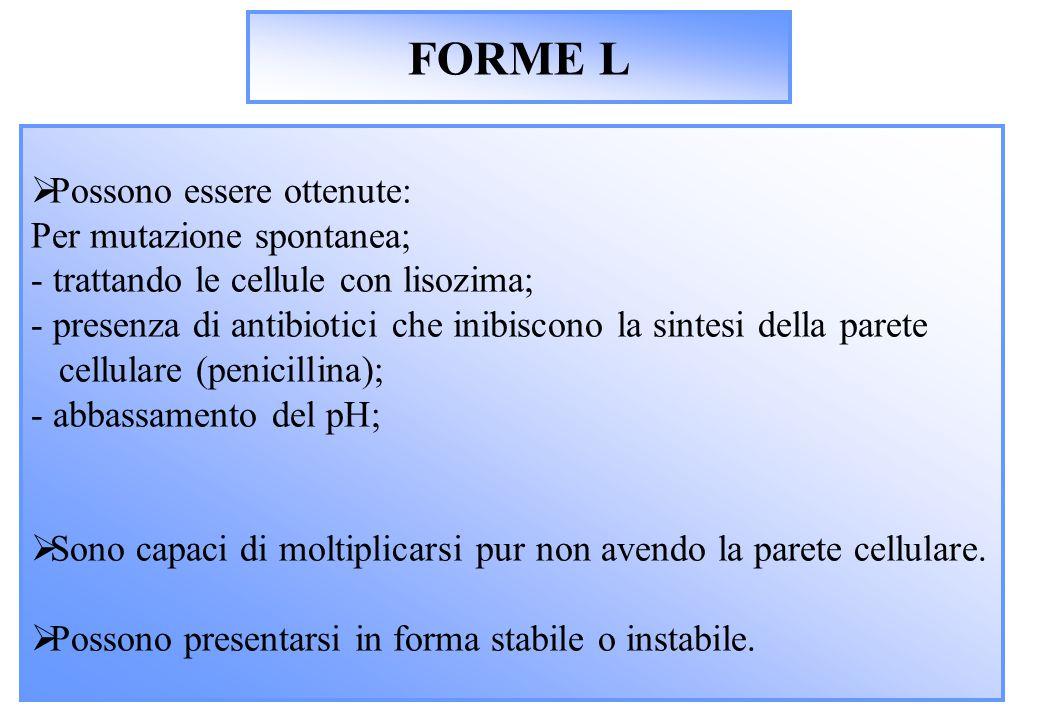 FORME L Possono essere ottenute: Per mutazione spontanea;