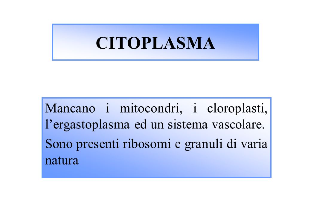 CITOPLASMA Mancano i mitocondri, i cloroplasti, l'ergastoplasma ed un sistema vascolare.