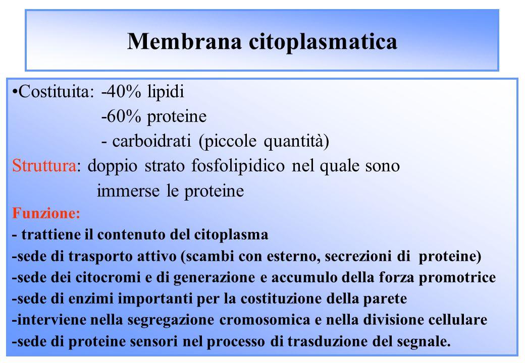 Membrana citoplasmatica