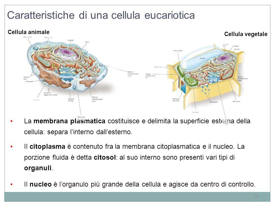 Caratteristiche di una cellula eucariotica