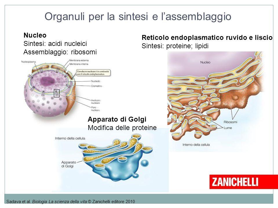 Organuli per la sintesi e l'assemblaggio