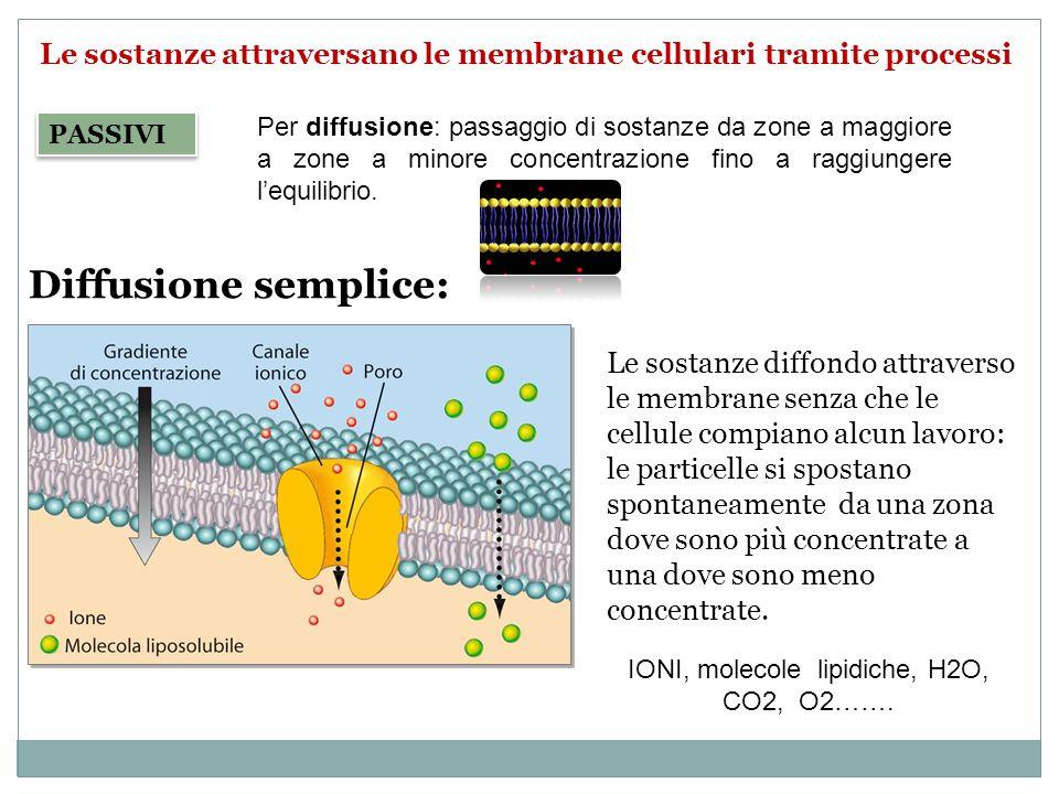 Le sostanze attraversano le membrane cellulari tramite processi