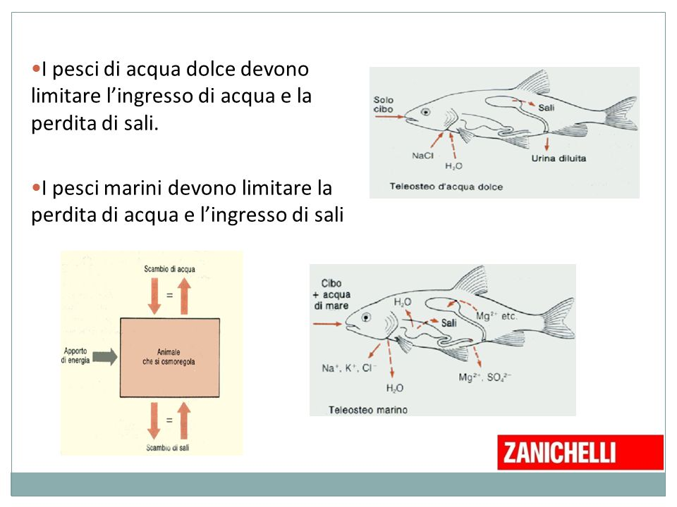 La cellula biologia e scienze a a 03 ppt video online for Pesci acqua dolce vendita online