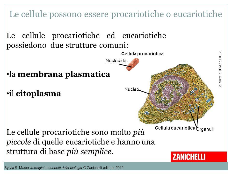 Le cellule possono essere procariotiche o eucariotiche
