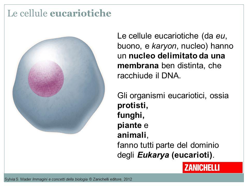 Le cellule eucariotiche