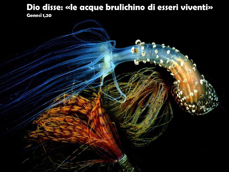 Dio disse: «le acque brulichino di esseri viventi» Genesi 1,20