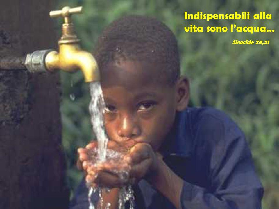 Indispensabili alla vita sono l'acqua…