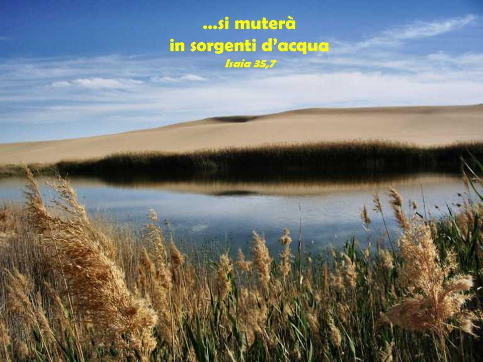 …si muterà in sorgenti d'acqua Isaia 35,7 Il suolo riarso…