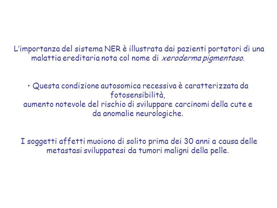 L'importanza del sistema NER è illustrata dai pazienti portatori di una malattia ereditaria nota col nome di xeroderma pigmentoso.