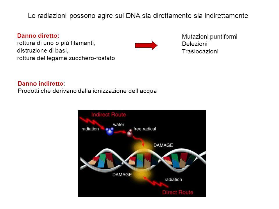 Le radiazioni possono agire sul DNA sia direttamente sia indirettamente
