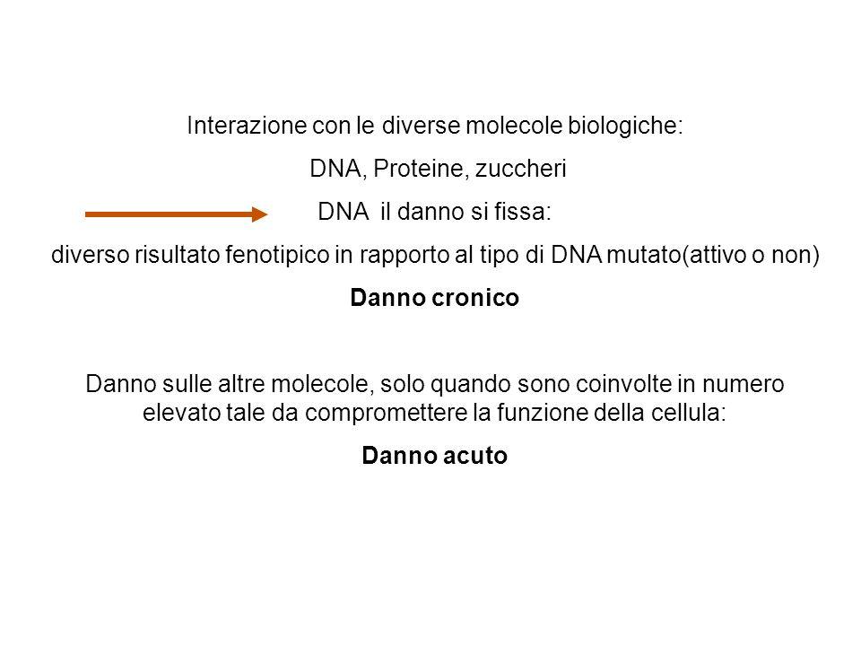 Interazione con le diverse molecole biologiche: