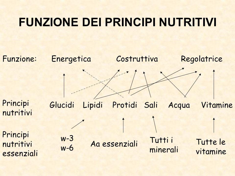 FUNZIONE DEI PRINCIPI NUTRITIVI